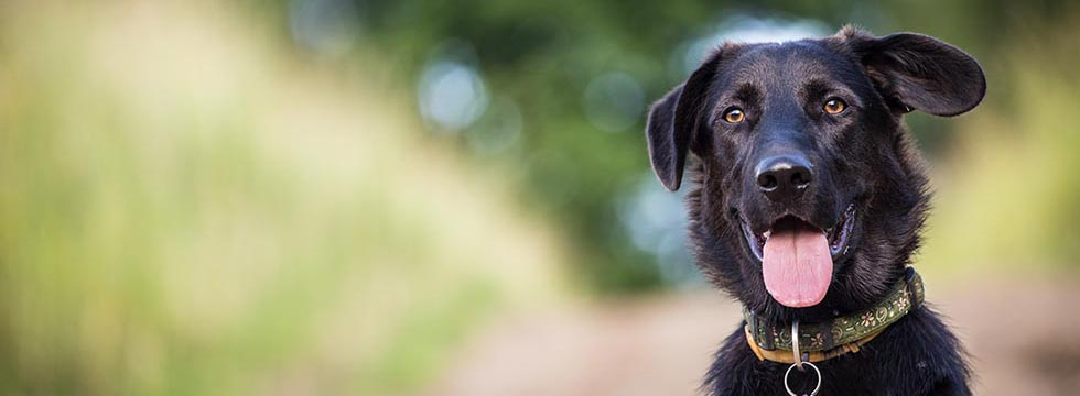 Dog training orlando reviews