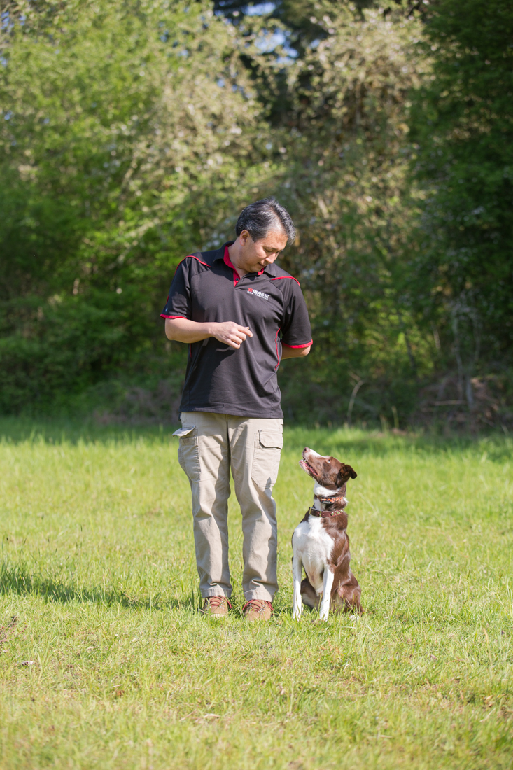 Image Result For Dog Training Classes Portland