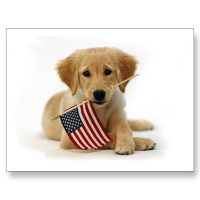 Book Dog Training The American Way