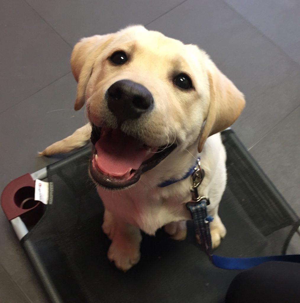 Got Sit Dog Training Prices