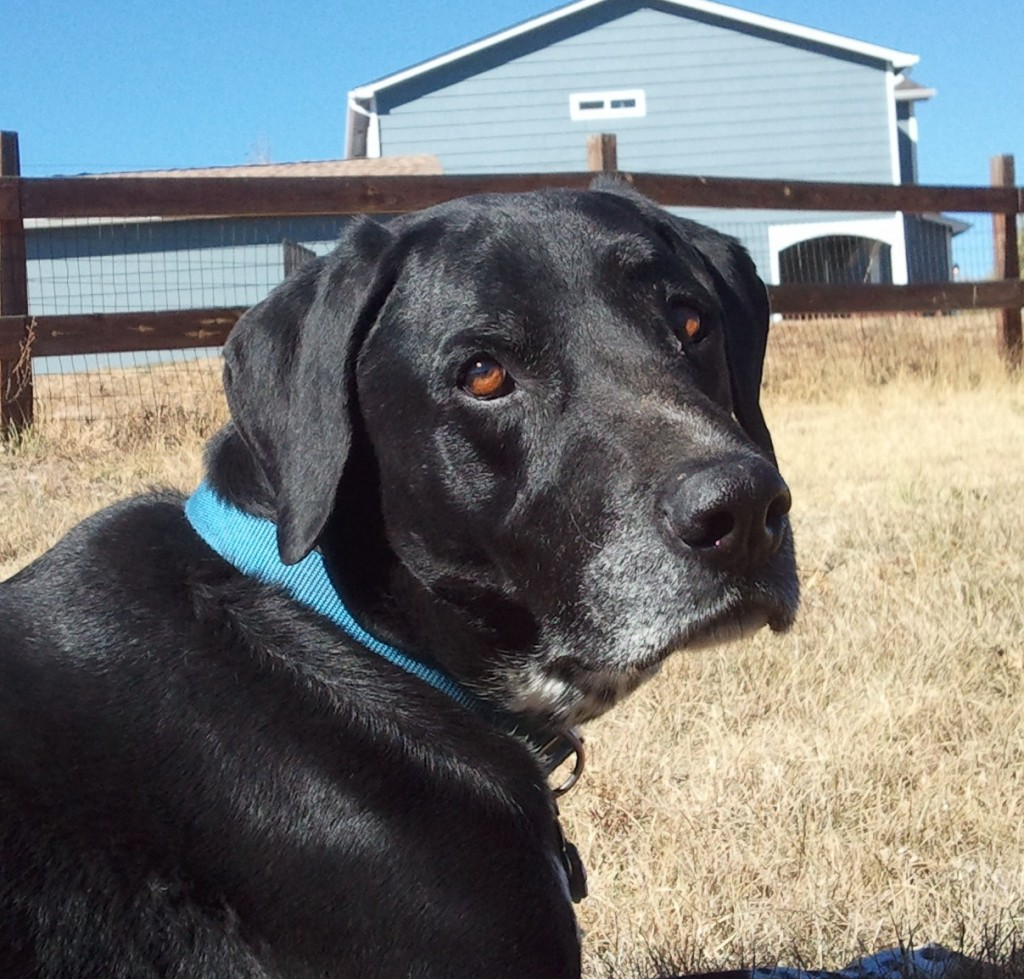 Dog Training Classes Raleigh Nc