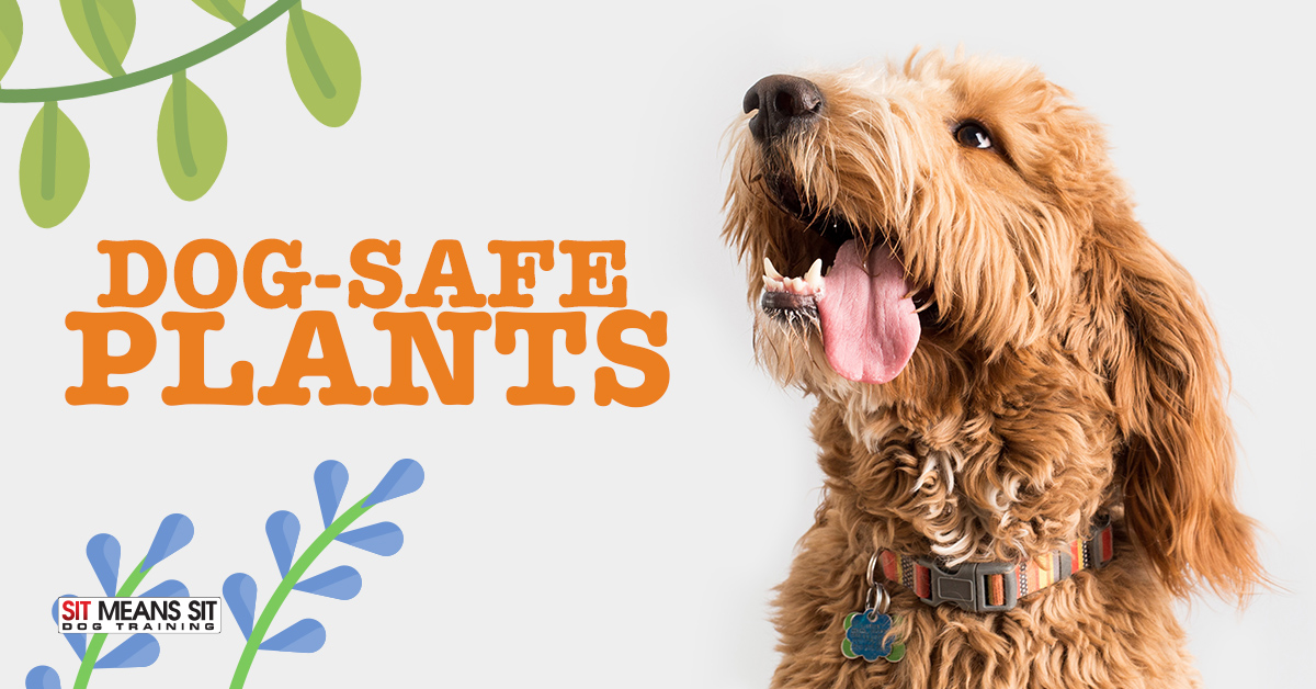Dog Safe Plants That Repel Mosquitoes And Bugs Sit Means Sit Dog Training Raleigh
