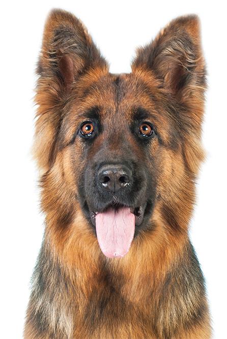 Dog Training Dayton Nv