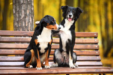 Do Dogs Make Friends Sit Means Sit San Gabriel Valley