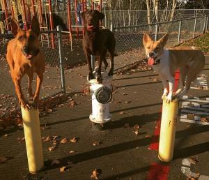 Dog Training Seattle Aggression