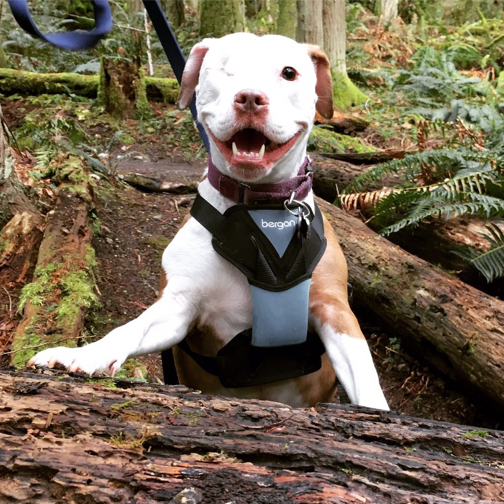 Dog Obedience Training Seattle