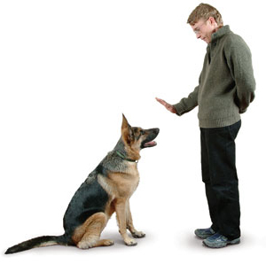 Dog Trainer At Can Do Canines