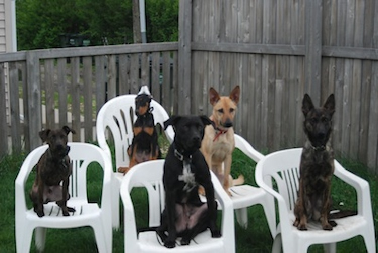 Frankfort Il Dog Training