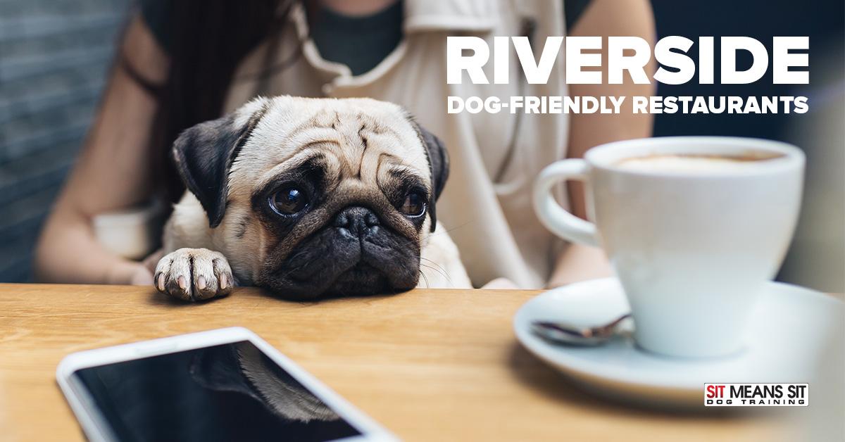Riverside Dog-Friendly Restaurants | Sit Means Sit South Orange County