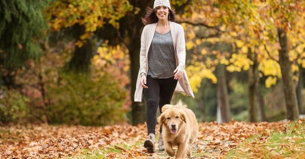 Dog Obedience Training Southeast Michigan
