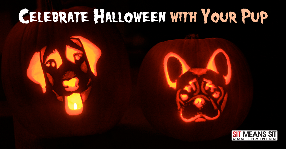 celebrate halloween with your pup in tampa