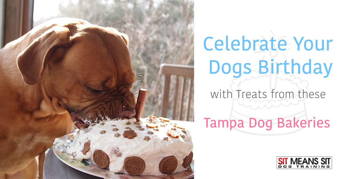 Celebrate Your Dogs Birthday With Treats From These Tampa Dog Bakeries