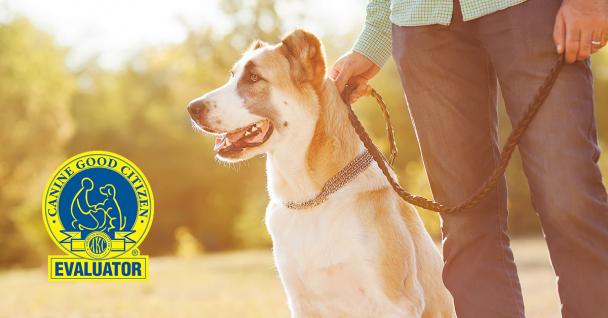 Canine Good Citizen Certifications