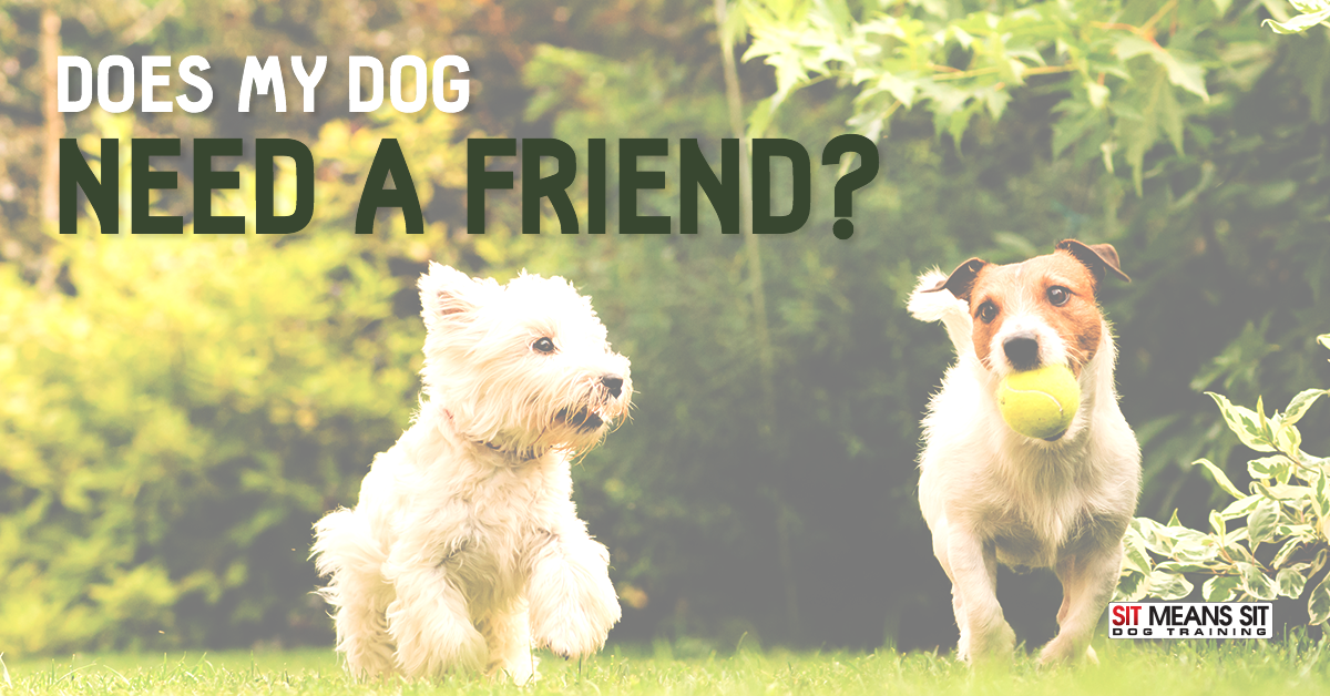 Does My Dog Need a Friend?