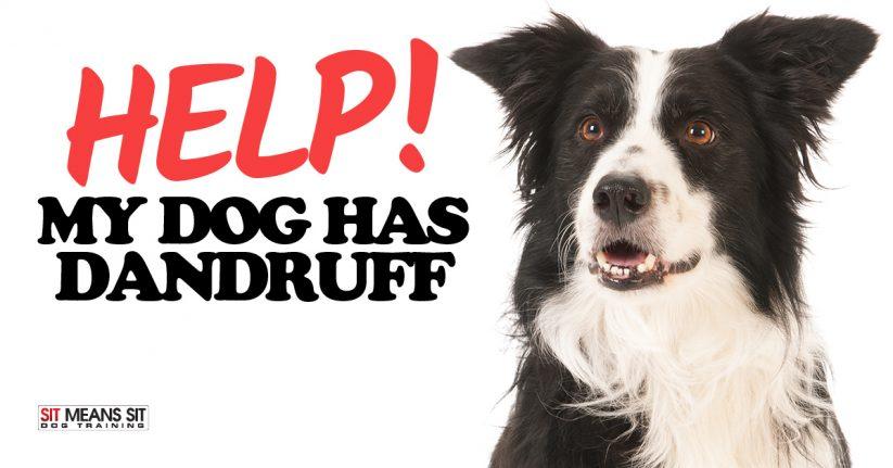 Help! My Dog has Dandruff