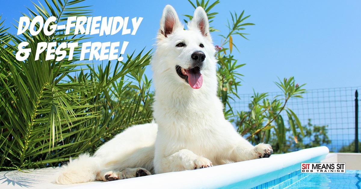 Dog-friendly backyard.
