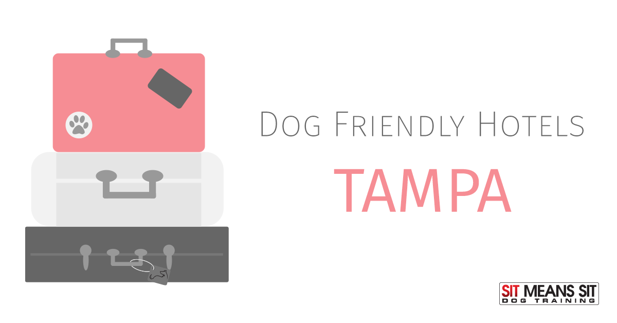 Dog Friendly Hotels Tampa