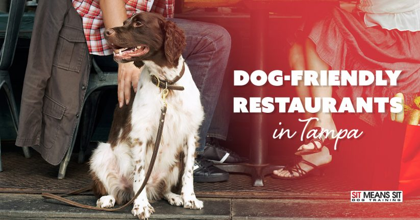 Dog Friendly Restaurants in Tampa