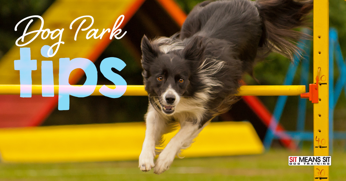 Tips for taking your dog to the park.