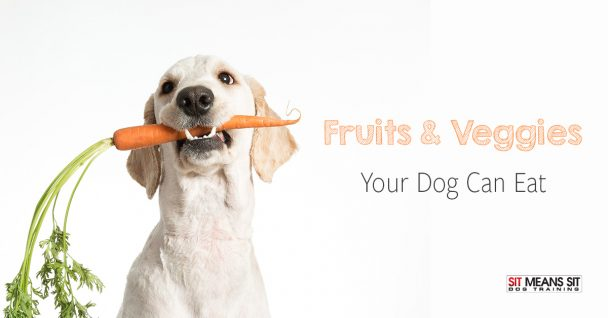 Fruits & Veggies Your Dog Can Eat