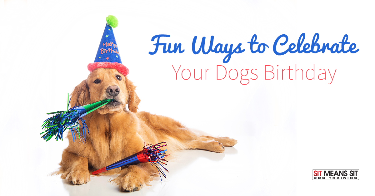 Fun Ways to Celebrate Your Dog's Birthday