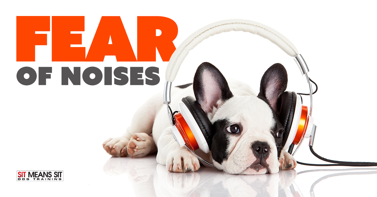 helping dogs fear of noise