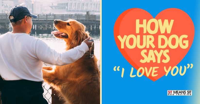 How Dogs Show Love