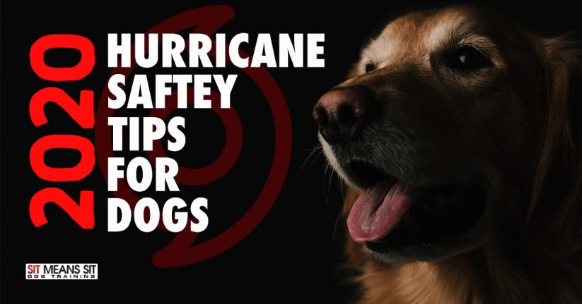 2020 Hurricane Safety Tips for Dogs