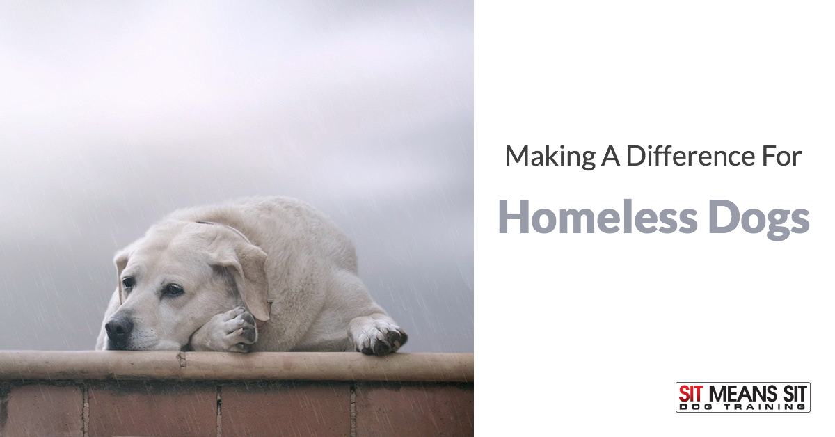 Making A Difference For Homeless Dogs