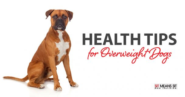 Health Tips for Overweight Dogs