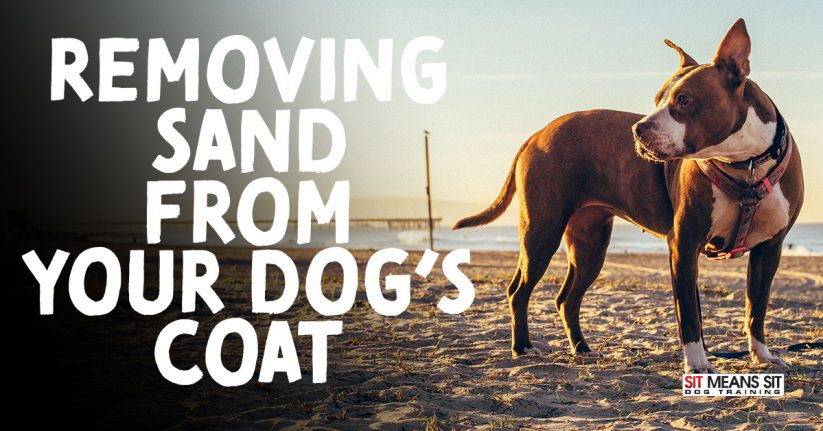 Removing Sand from Your Dog's Coat After a Day at the Beach