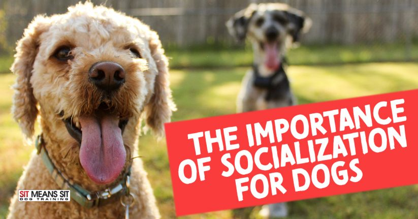 The Importance of Socialization for Dogs