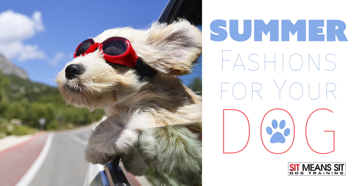 Summer Fashions For Your Pup