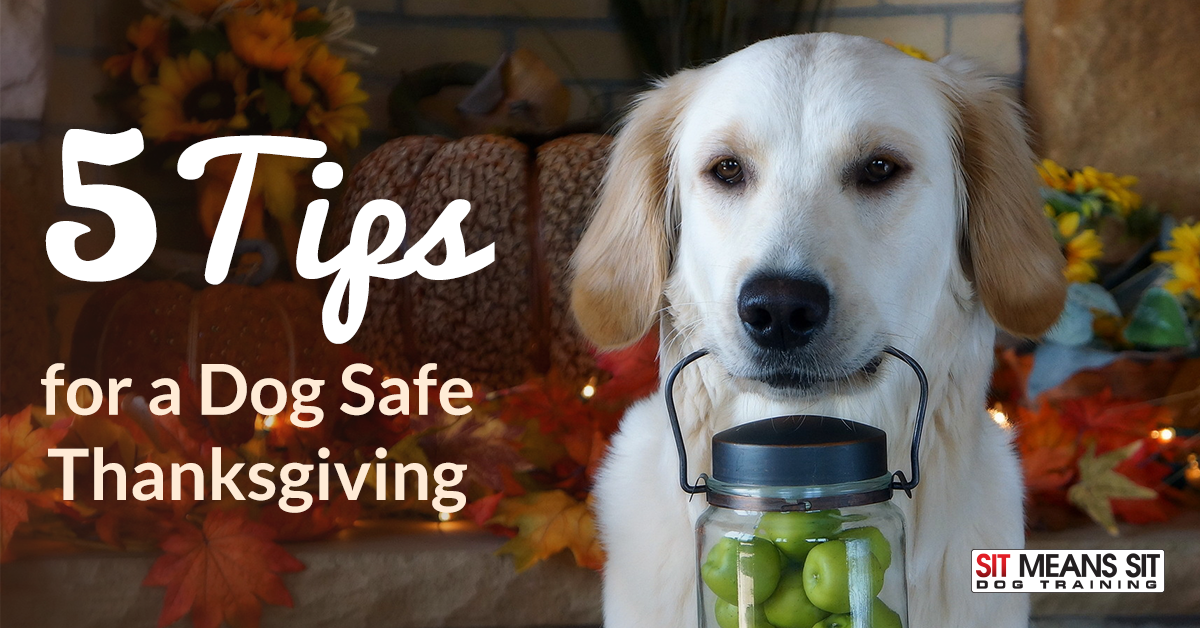 tips for dog safe thanksgiving